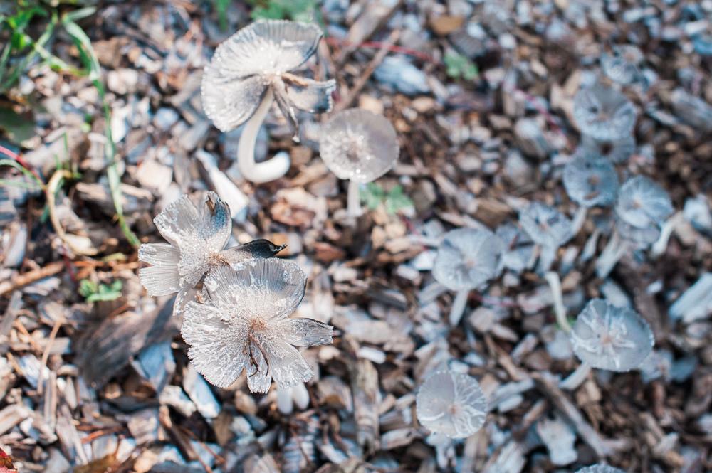 raising-wildlings-nature-program-shade-mills-2